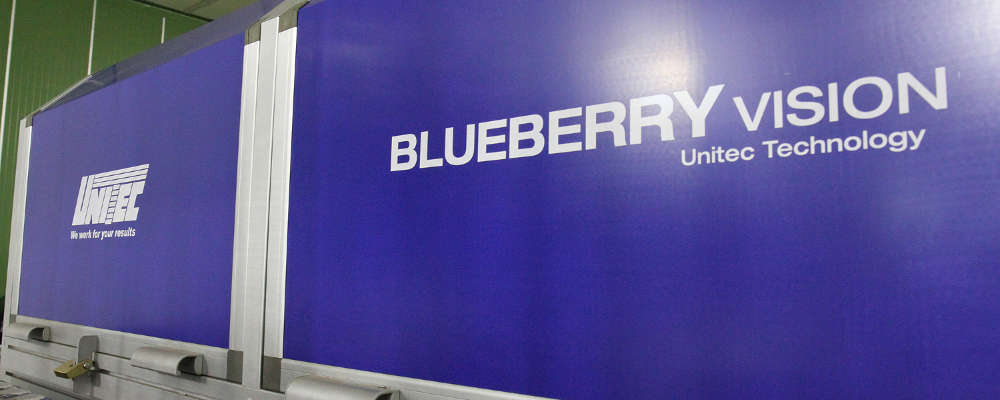 Una rivoluzione nell 39 industria dei mirtilli blueberry vision for Vision industries group