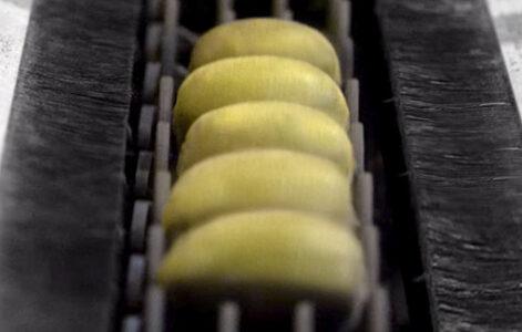 Macchina per la selezione e calibratura del kiwi